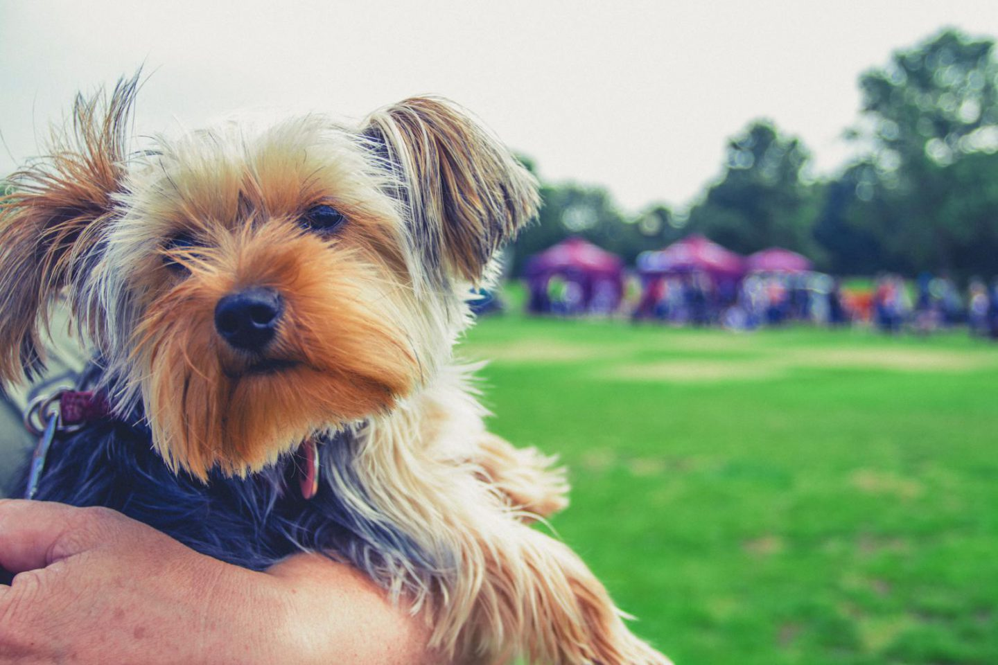 10 cutest sights at The Parks Trust Milton Keynes Big Doggie Do
