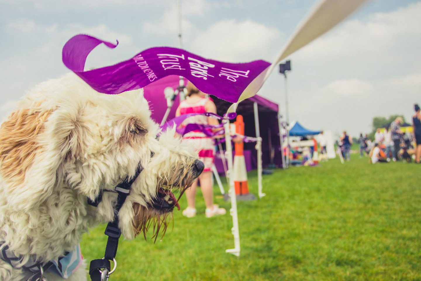 Doggie's day out: The Parks Trust Milton Keynes Big Doggie Do 2018