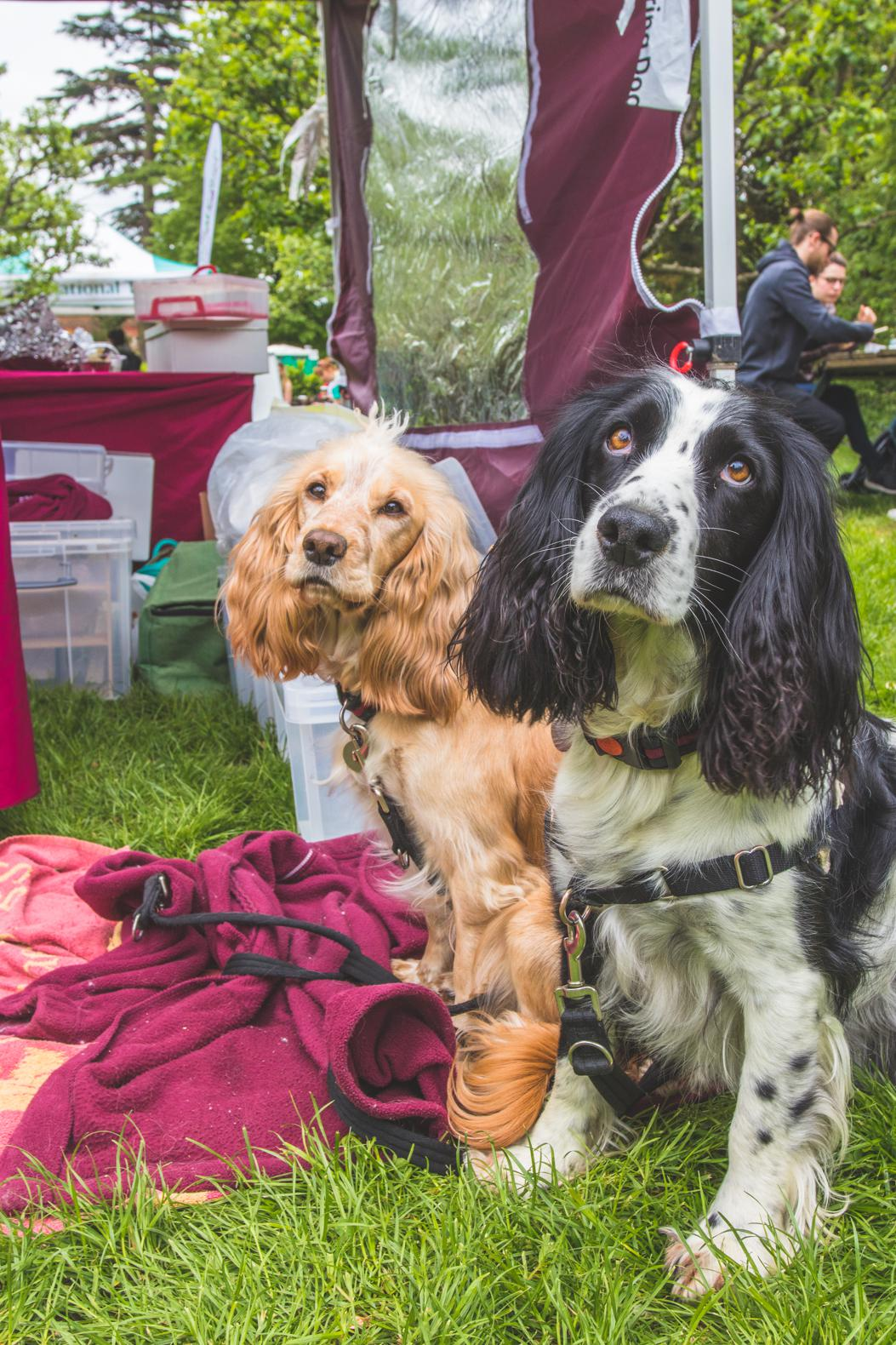 Doggie Day Out: The Great British Dog Walk for Hearing Dogs at Hughenden Manor