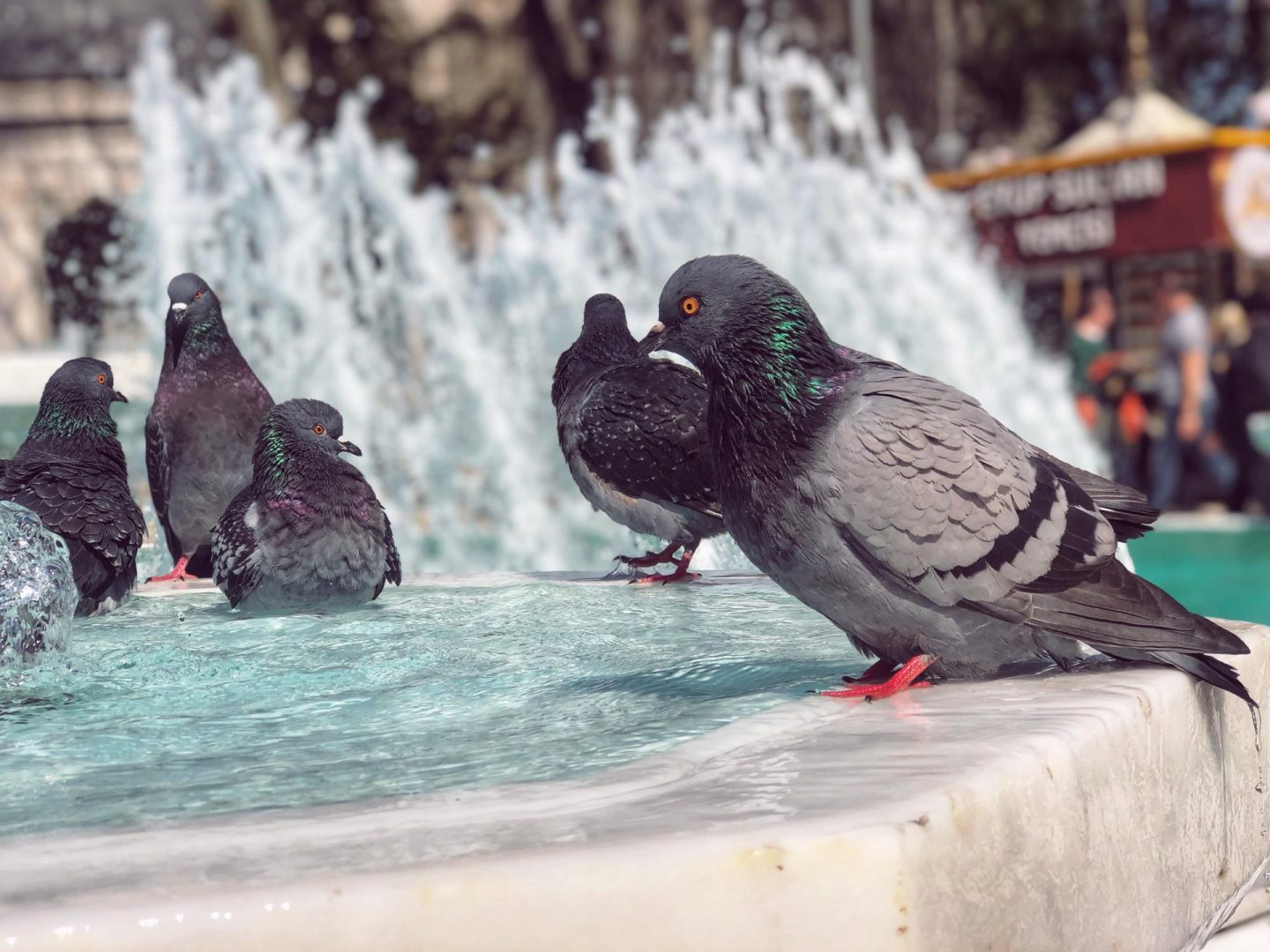 River Horse, Jacuzzi Pigeon, Sea Lizard – 12 literal translations of animal names  that will amaze you